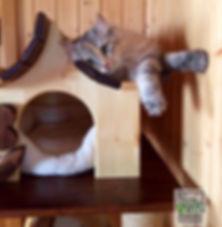 комплекс +для кошек москва, домик +для кота +с когтеточкой, игровой комплекс +для кошек москва, комплексы кошек интернет магазин
