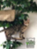 Дерево для кошки комплекс для кошки