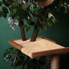 Дерево для кошки Catio 1