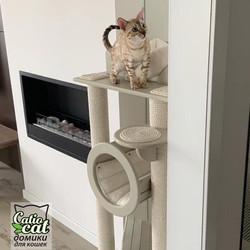 Белый домик для кошки Catiocat
