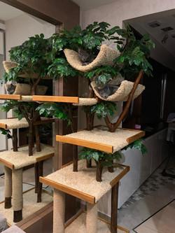 Кошачье дерево с двумя полками