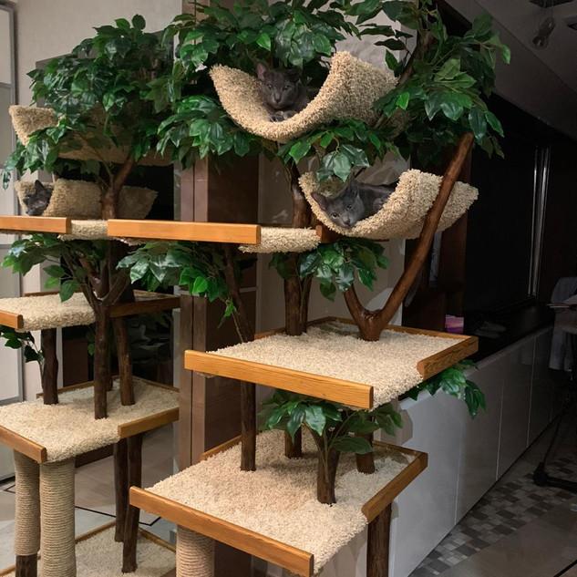 Дерево для кошки с двумя полками.JPG
