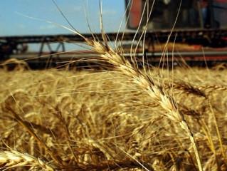 La FAO prevé un stock mundial de cereales sin precedentes