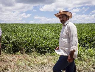 Paraguay dejó de generar $us 176 millones por no industrializar su soja