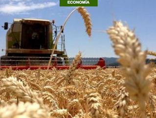 Día Nacional del Trigo trae 2 nuevas variedades