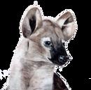 emily_hyena.png