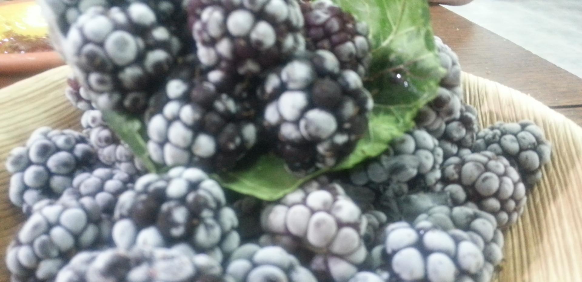 Raspberry on the organic farm