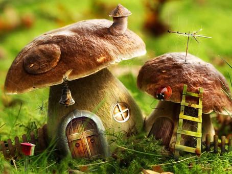 Осень, баня, грибы