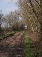 Hectors Lane