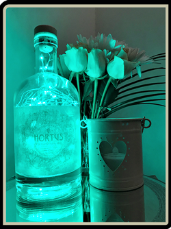 Hortus Citrus Gin Bottle