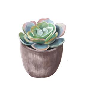 Digital Succulent Painting