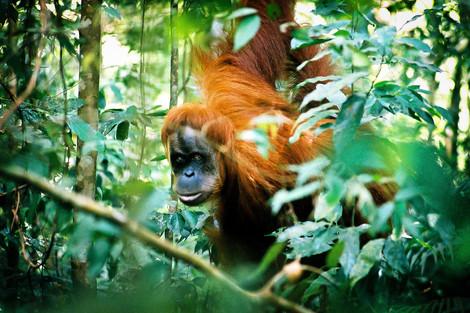 Bukit Lawang, Sumatra, Indonesia, 2003