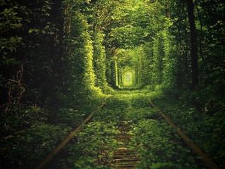 #Issue 76: El túnel más romántico del mundo.