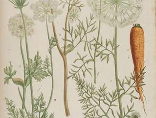 El uso de la zanahoria que nunca habías imaginado.