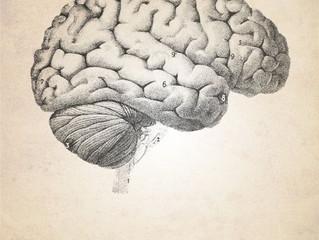 #Issue 57: Mitos y verdades sobre el cerebro.