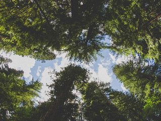 #Issue 37: ¿Crees que lo sabes todo sobre los bosques?