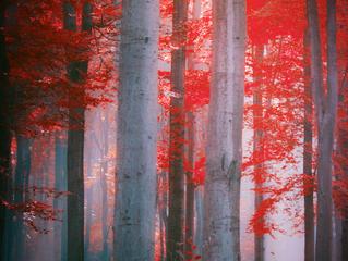 #Issue 35: ¿Por qué compiten los árboles?