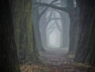 #Issue 17: El legendario Bosque de Sherwood.