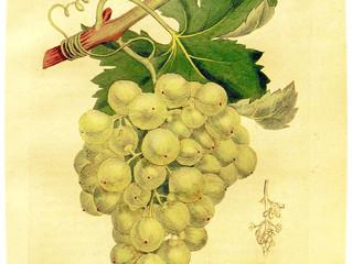 Lo que esconde el corazón de las uvas.