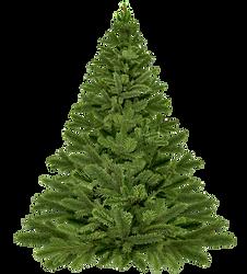 christmas-tree-christmas-1796131_1920.pn
