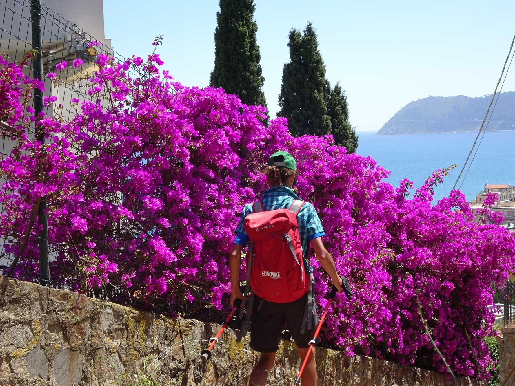 Piemont-Ligurien-Ligurische-Kueste-Panoramablick-Blumen-Wanderer