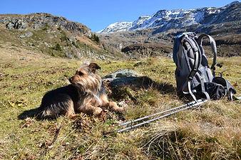 Vandra med hund i alperna