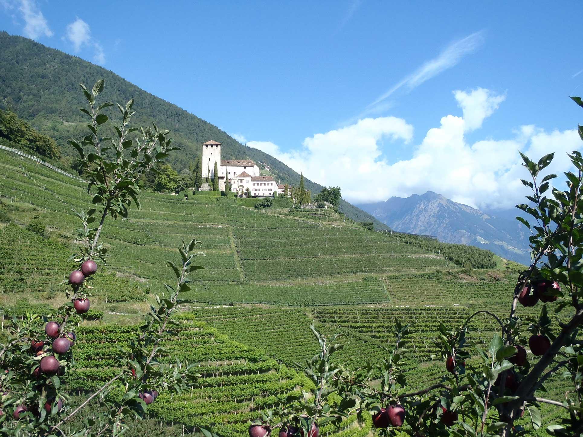 Meran-Gardasee_Burg_Wein