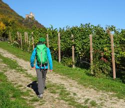 Meran-Gardasee_Weingarten_Wanderer_4