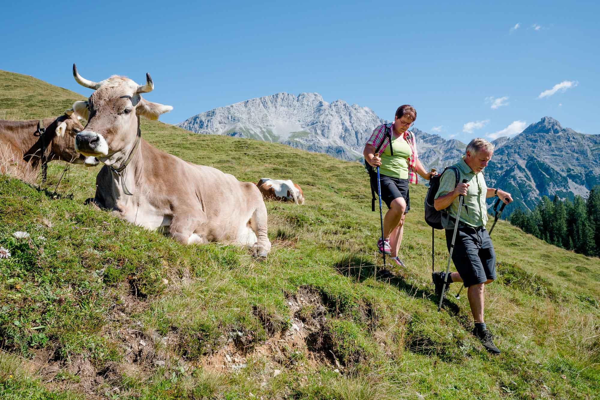 Bildrecht--Salzburger-Saalachtal-Tourismus-011