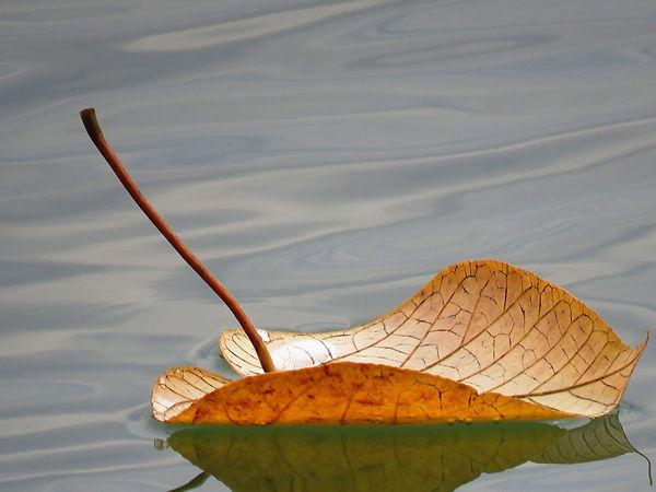 leaf-floating-2438419_1920.jpg