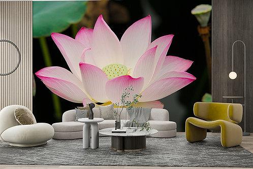 Fleurs de Lotus 1