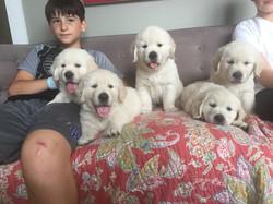 5 bundles of cuteness