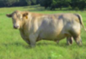 Backbone Ranch Healthy Grass Fed Beef North Texas