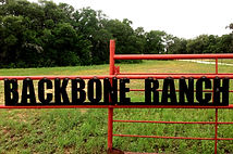 Backbone Ranch Naturally Raised Grass Fed Beef Dallas | Murray Grey Cattle