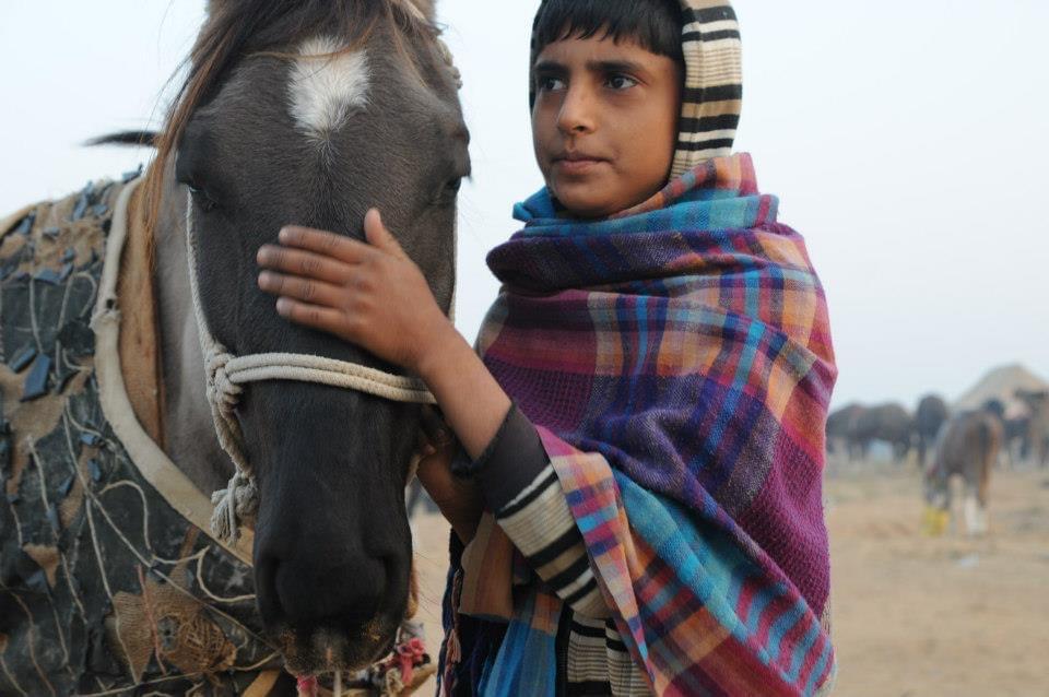 Boy and horse at Pushkar Came Fair India