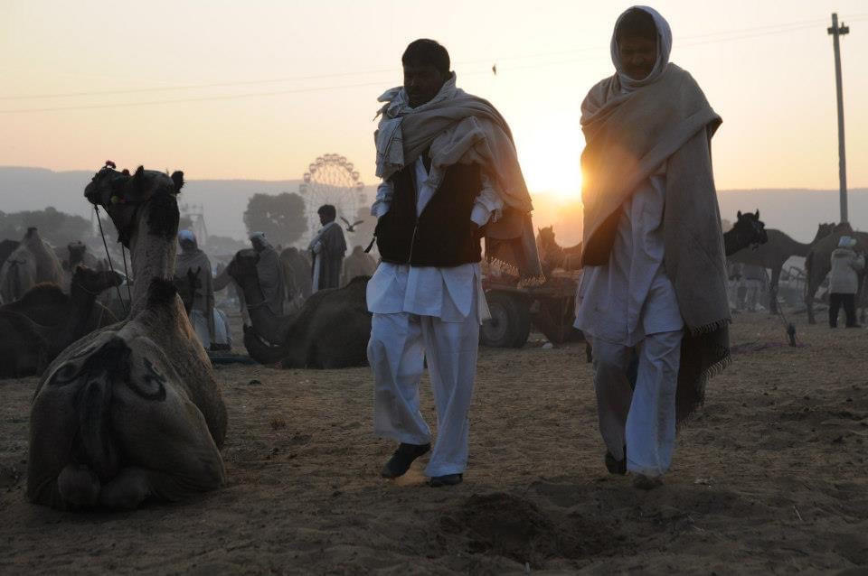 Pushkar Camel Fair India