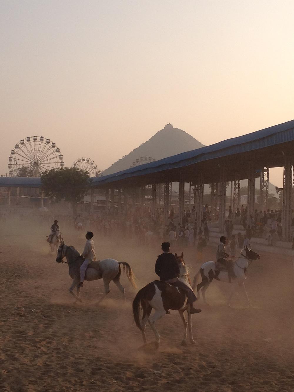 Horses at the Pushkar Camel Fair India