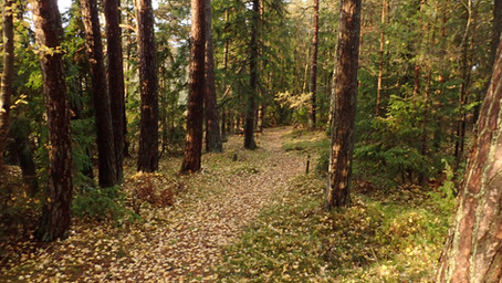 Ett historiskt beslut att skydda Stornäset