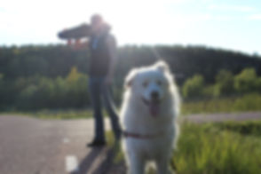 Nöjd hund.JPG