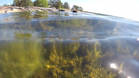 Fiske för Östersjön