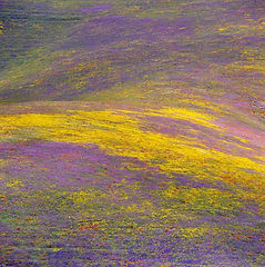 Wildflowers Rolling Hills Detail w Yello