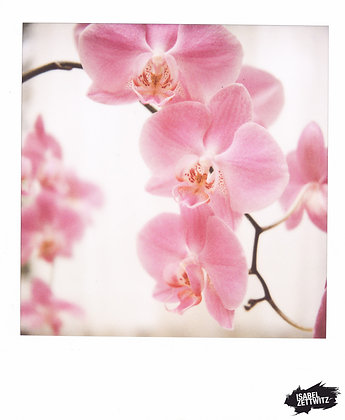 POLAROID-PRINT Orchidee