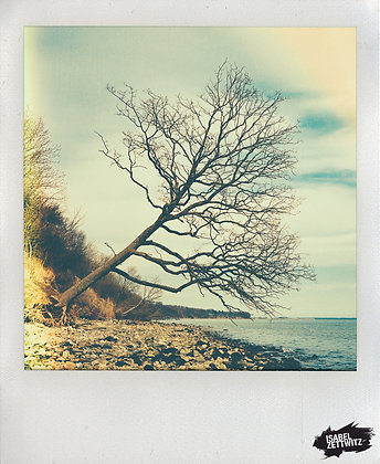 POLAROID-PRINT - Baum