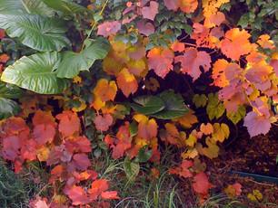 An autumnal image ...