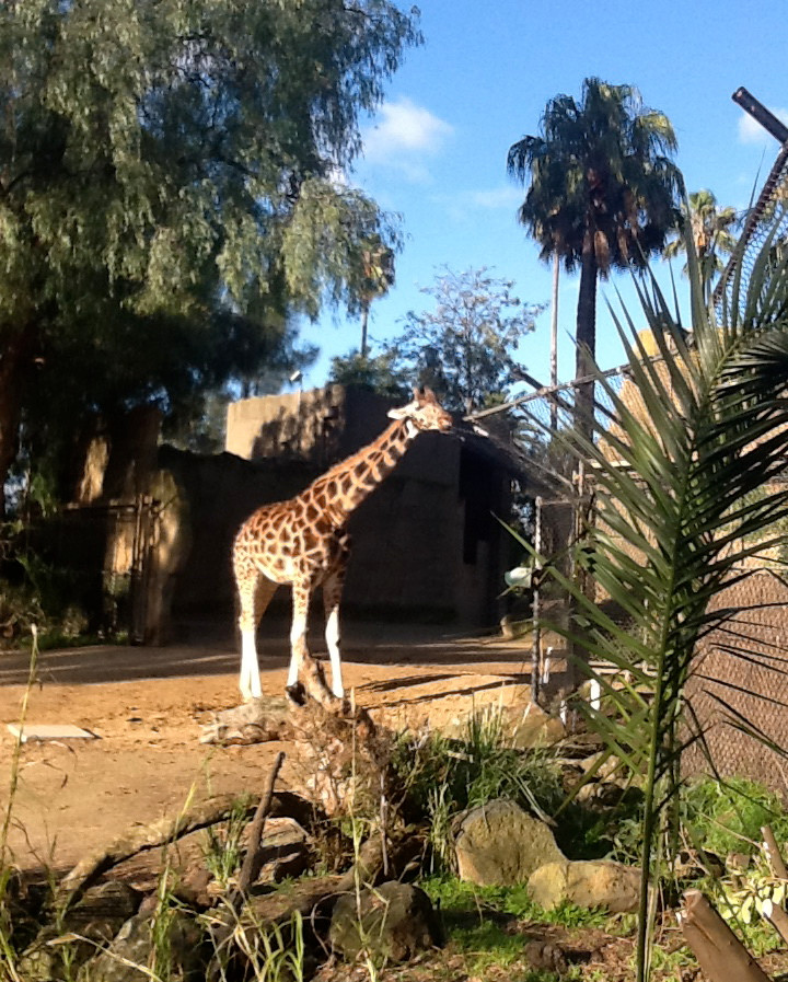 Loved the giraffes ...