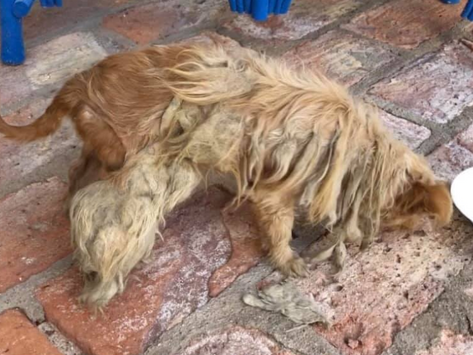 Dog Rescued from Dump in Puerto Penasco, Mexico