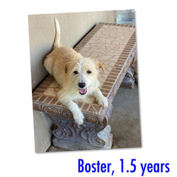 Boster