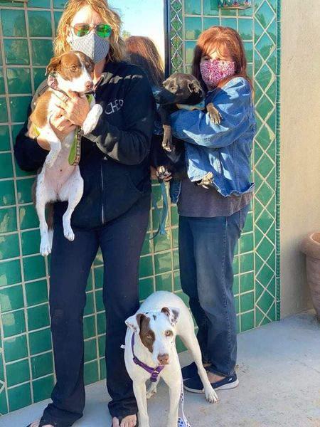 3 street dogs.jpg
