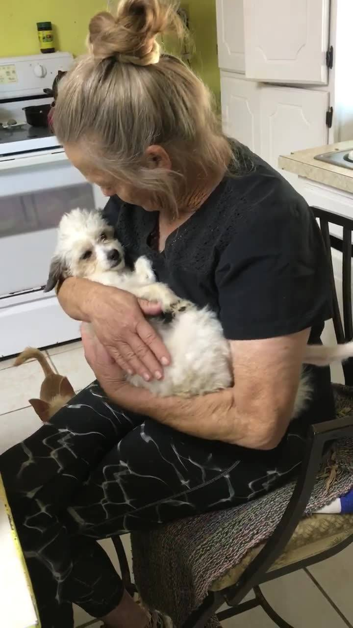 Barb's Dog Rescue was founded in 2001 by Barb Mumaugh. Upon moving to Puerto Penasco she opened her doors to dogs in need. In that first year, 10 dogs were rescued. Barb quickly recognized the great need for dogs in the community and began to expand