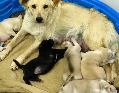 These Rescued Mama Dogs in Puerto Penasco, Mexico, Need Your Help